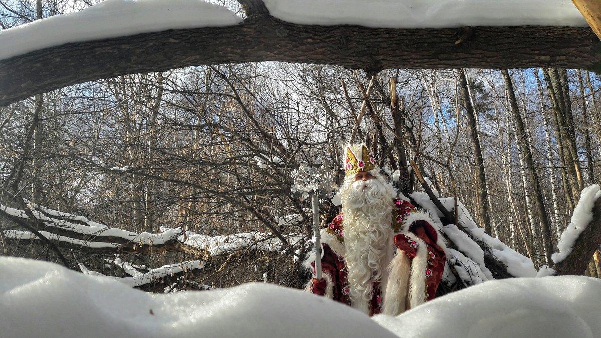 В лесу - Ирина Крохмаль