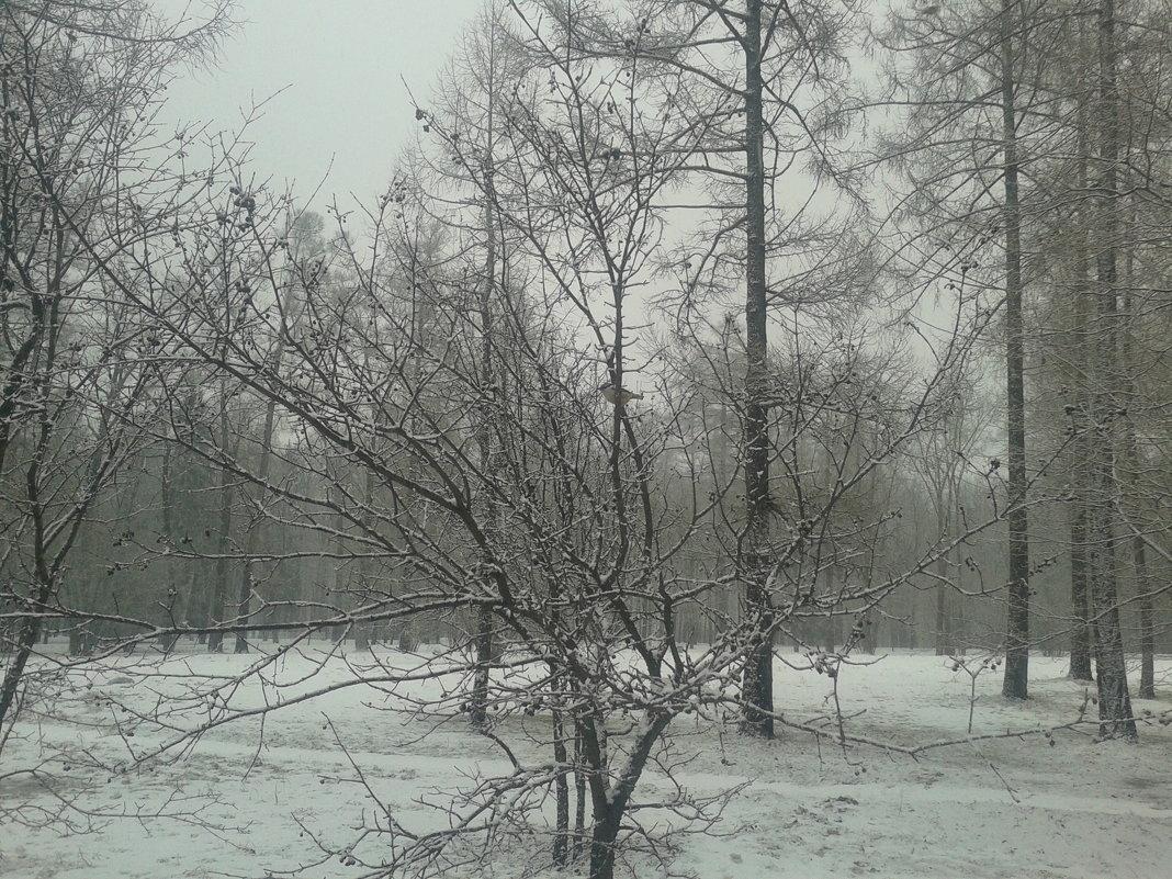 Мокрый снег - Сапсан