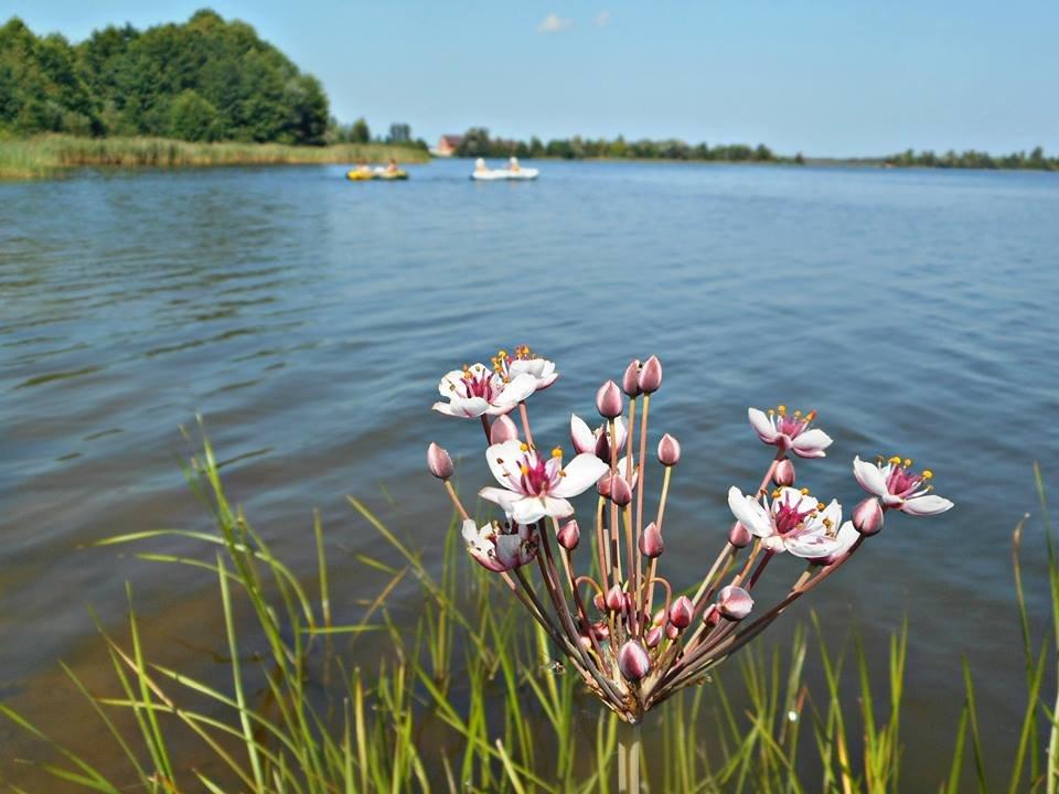 У озера.. - Galina ✋ ✋✋
