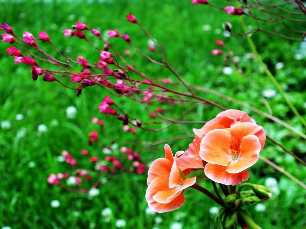 Цветы необычной красоты 182