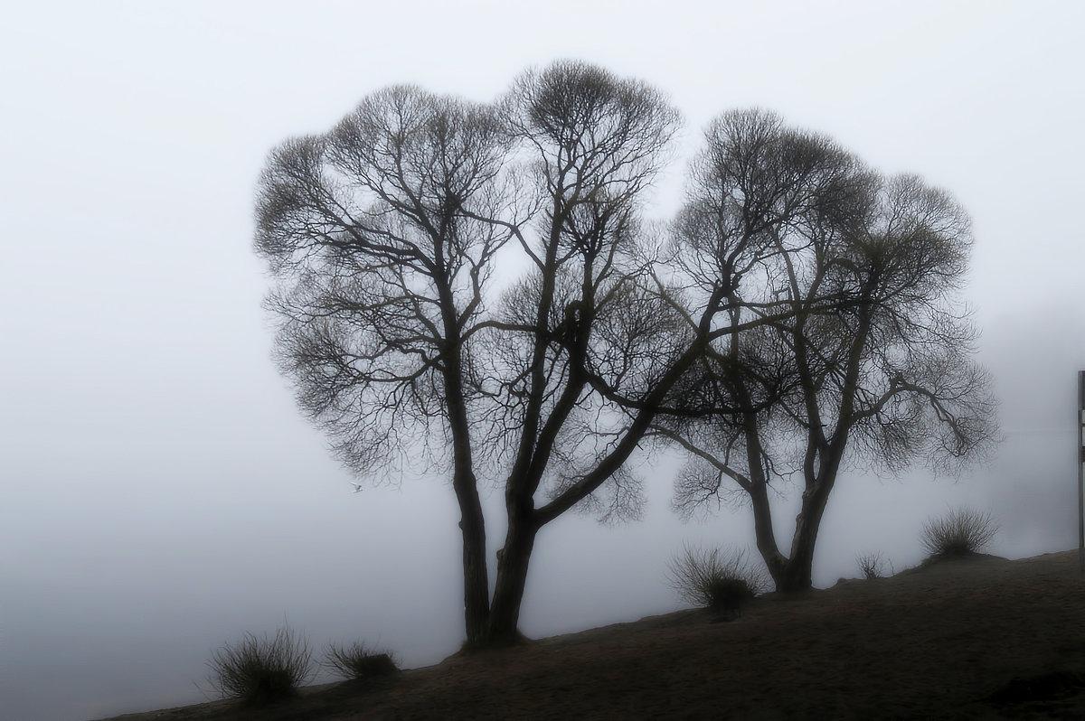 В тумане прятались окрестные брега.... - Юрий Цыплятников