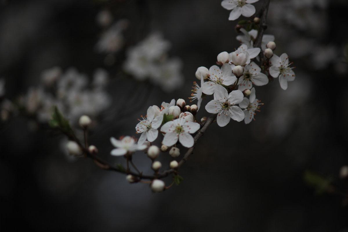 Весна пришла-9. - Руслан Грицунь