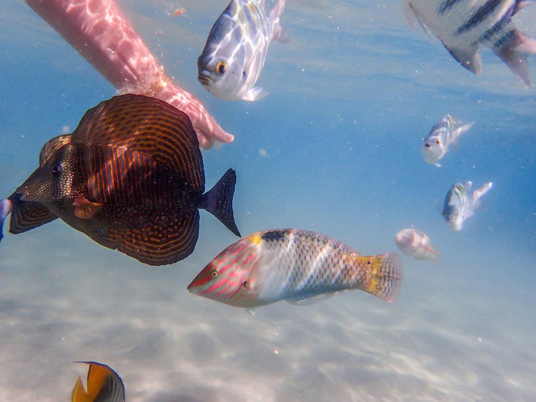 рыбки ручные - Лариса Батурова