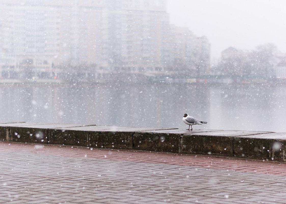 Чайка под снегом - юрий