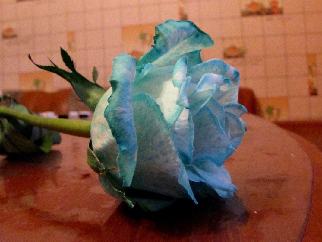 небесный цветок - doberman