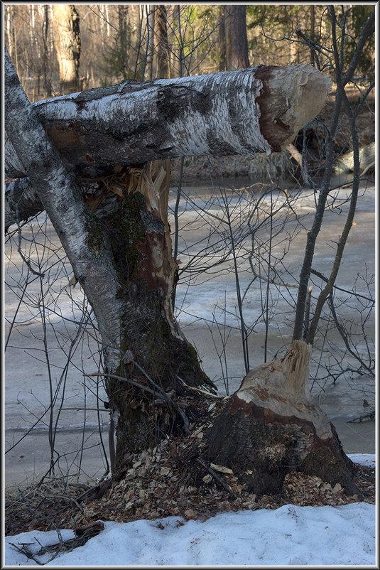 Бобровые истории - Михаил Розенберг