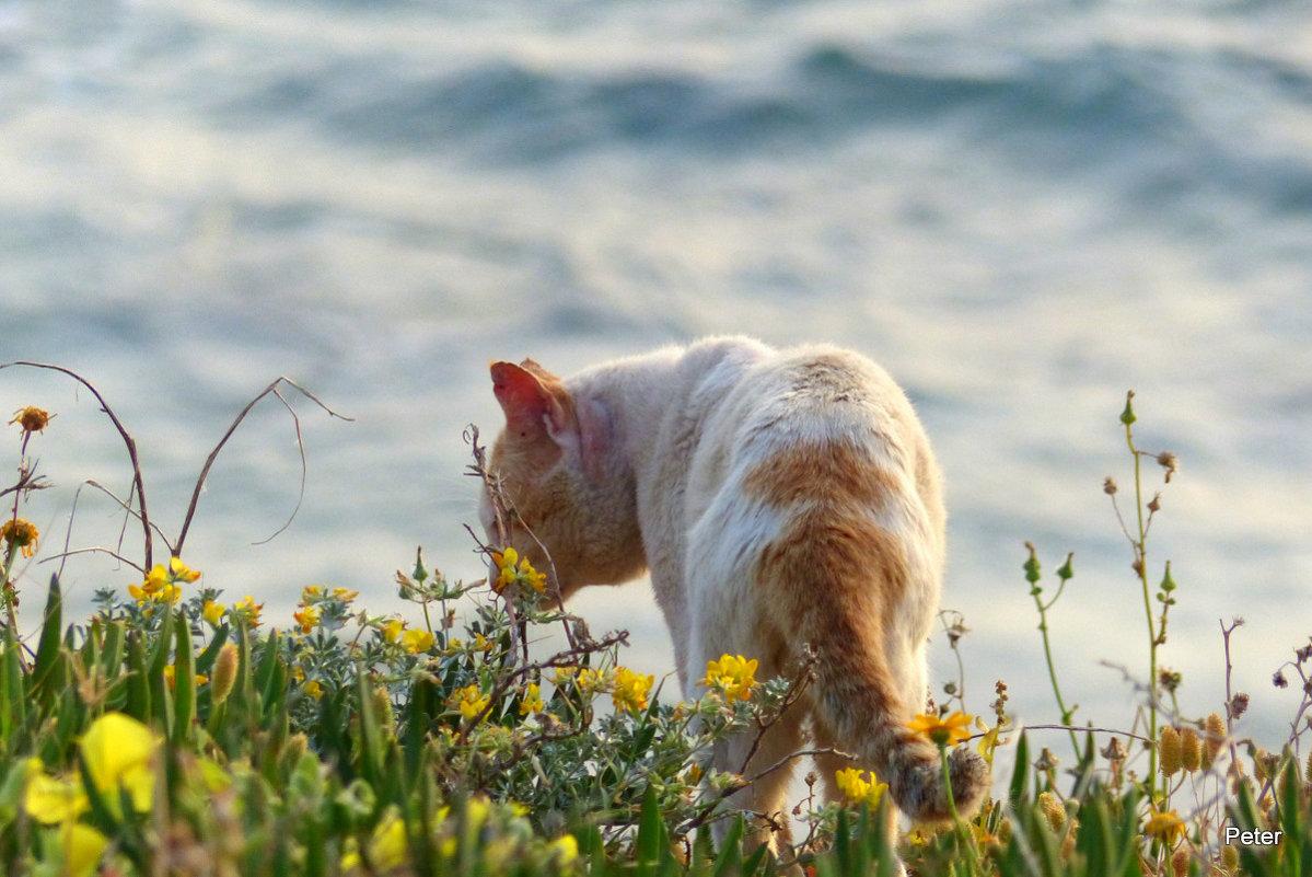Кот и море. - Пётр Беркун