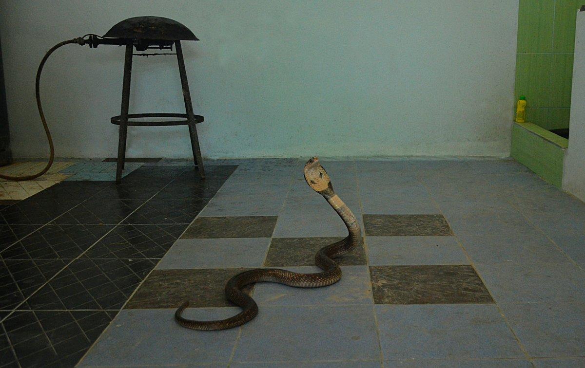 Я кобра, но я уже еда... ;( - Владимир Куликов