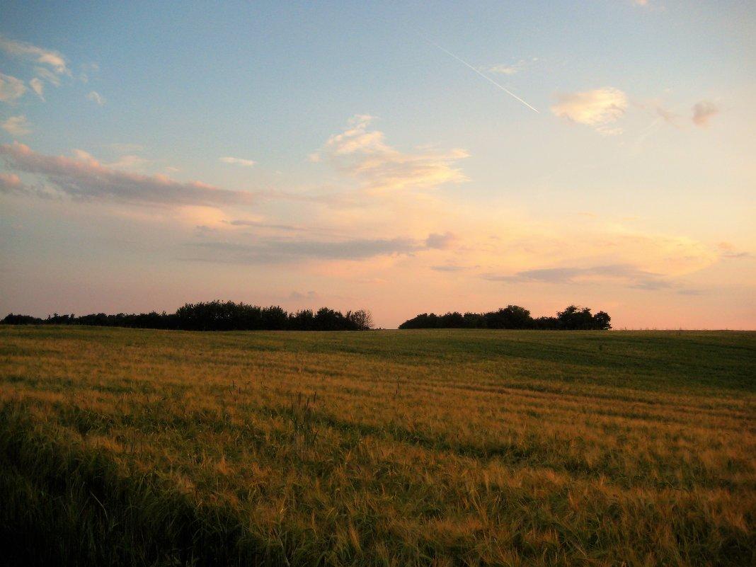 Хлебное поле в свете заката - spm62 Baiakhcheva Svetlana