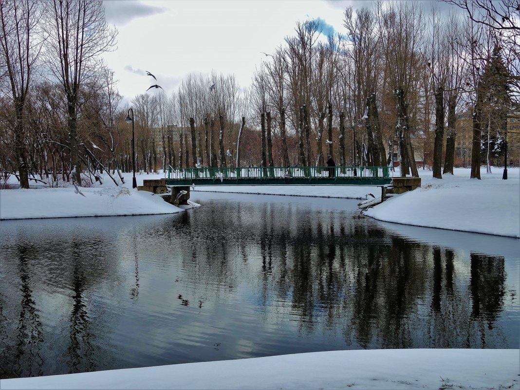 Чайки над мостиком... - Sergey Gordoff