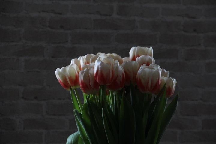 Тюльпаны - Ирина Горовик