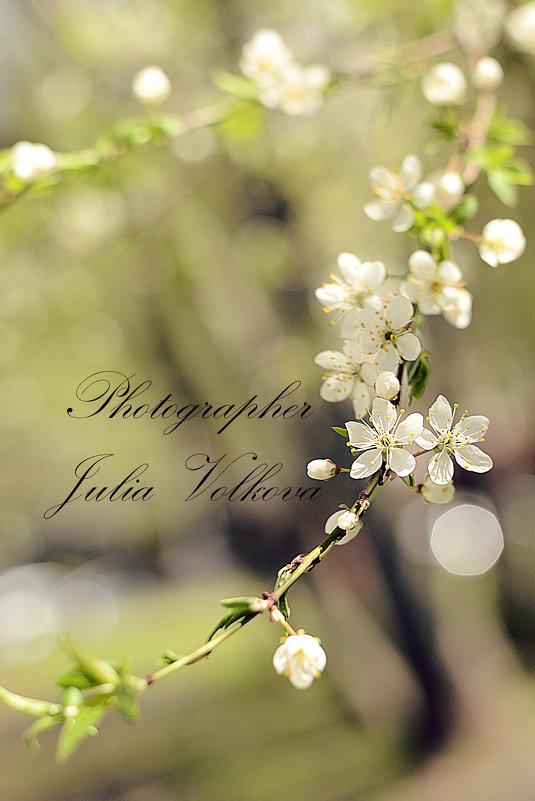 Весна - Julia Volkova