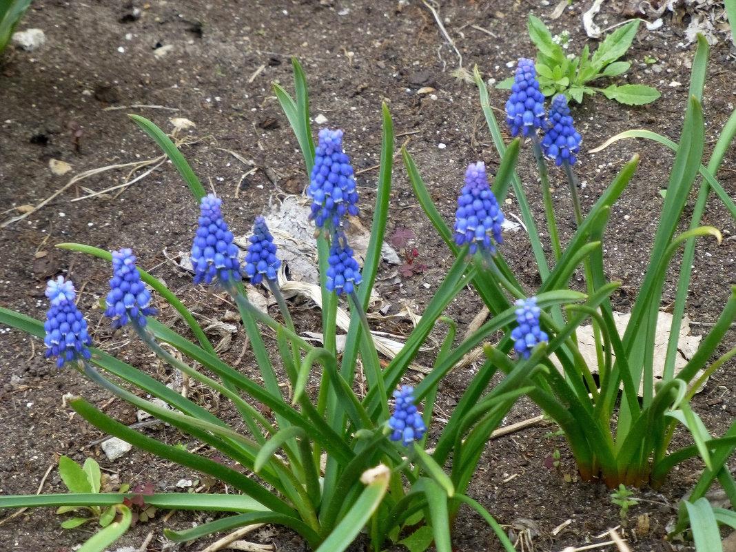 Цветы у дома - Наиля
