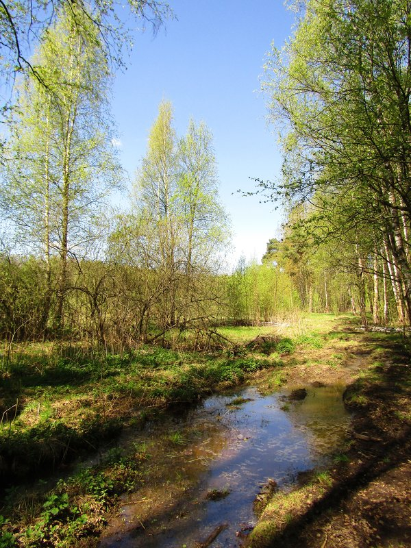 Возле леса - Андрей Снегерёв