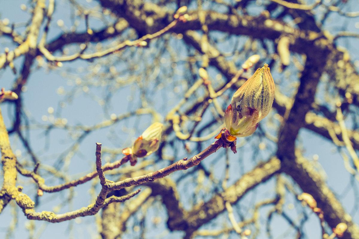 Весна! Все готово - Marina Talberga