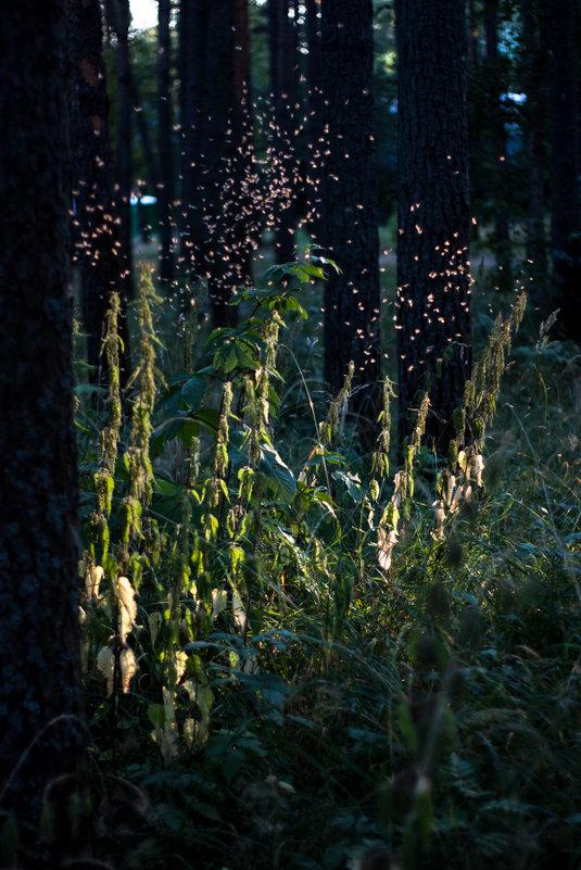 Маленькие лесные эльфы 2 - Клиентова Алиса