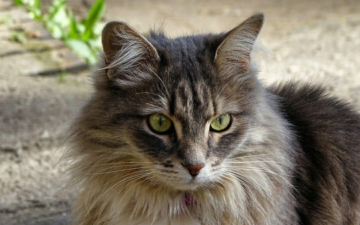 Зеленоглазая кошка - Милешкин Владимир Алексеевич