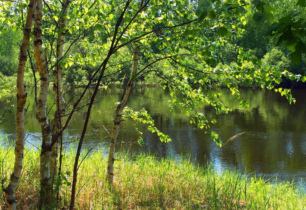 К летним дням торопится листва... - Лесо-Вед (Баранов)