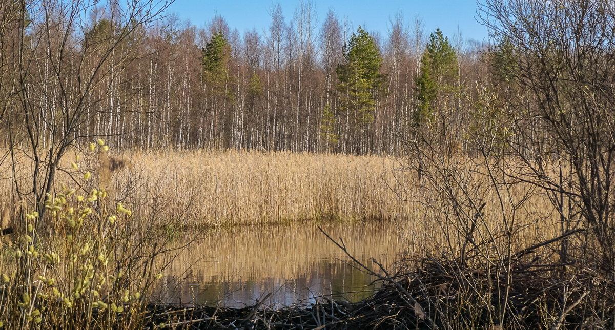 Весенняя заводь - Владимир Гилясев