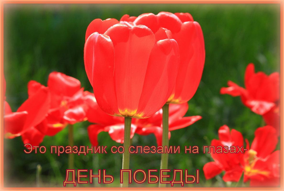 С Праздником 9 Мая, с Днём ПОБЕДЫ - Татьяна Ломтева