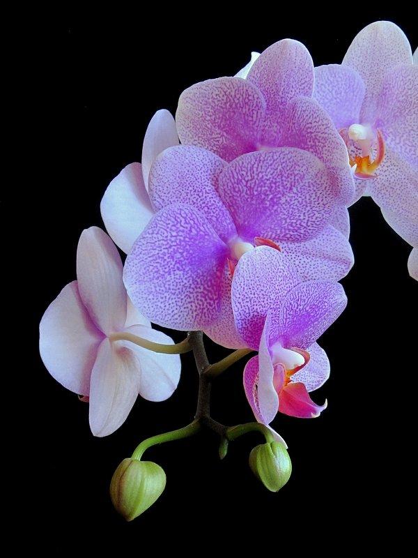 Майская орхидея - Сергей Карачин