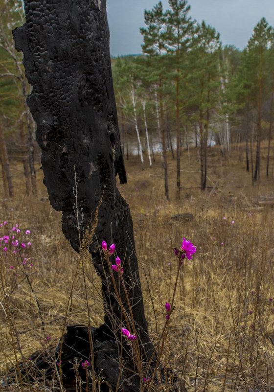 весна - Анатолий Корнейчук
