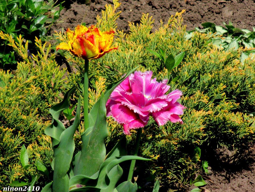 Разноцветье весны - Нина Бутко