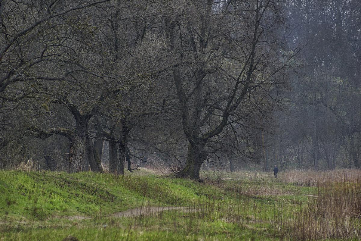 вековой лес... - Владимир Матва