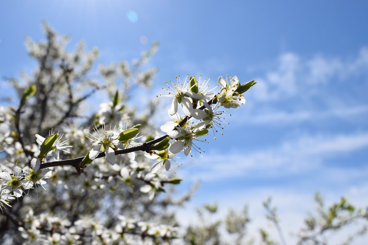 Дыхание весны - Мария Минченко