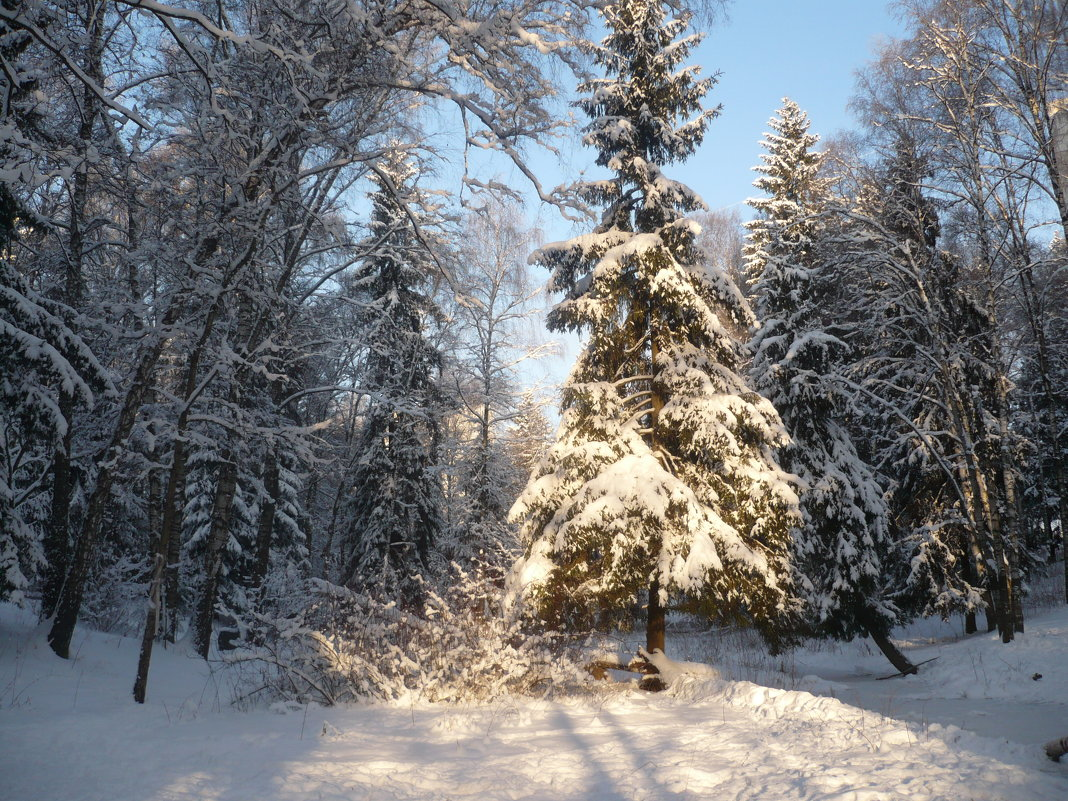 Лесная красавица - Жанна Литуева