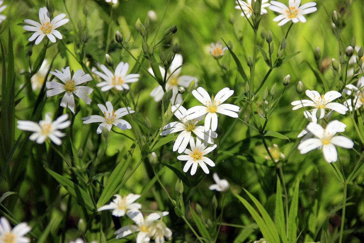 лесное цветение - оксана