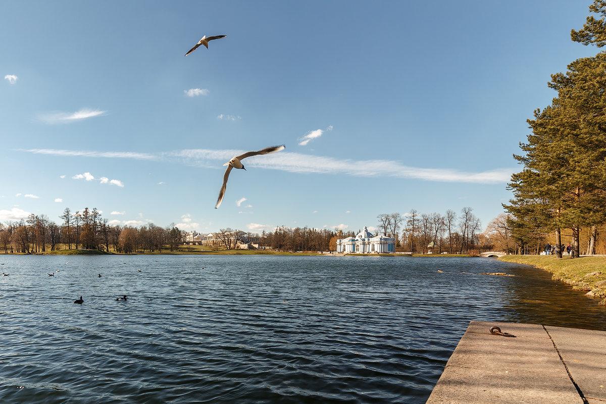 В Екатерининском Парке, Царское Село - Александр Кислицын