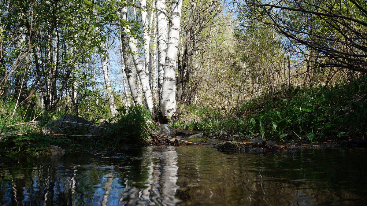 весна на Алтае - Alexandr Staroverov