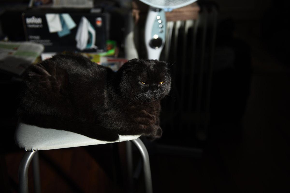 Мой кот Арчибальд - Алексей Солодовников