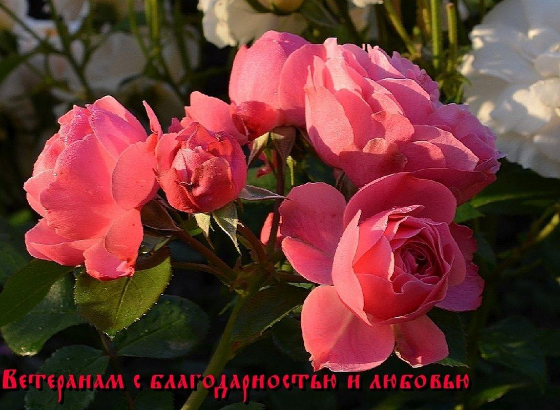 ВАМ,НАШИМ ОСВОБОДИТЕЛЯМ - Анатолий Восточный