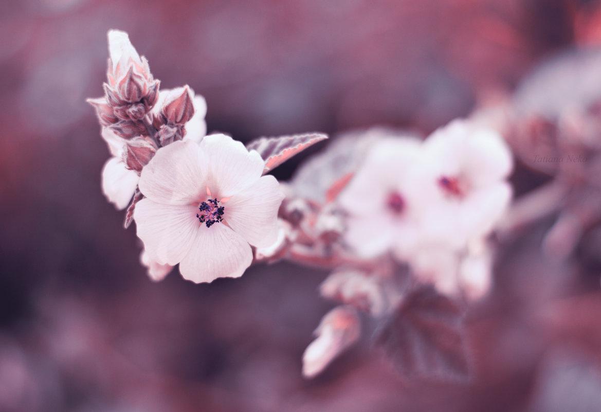 Один раз в год сады цветут - Tatiana Neko