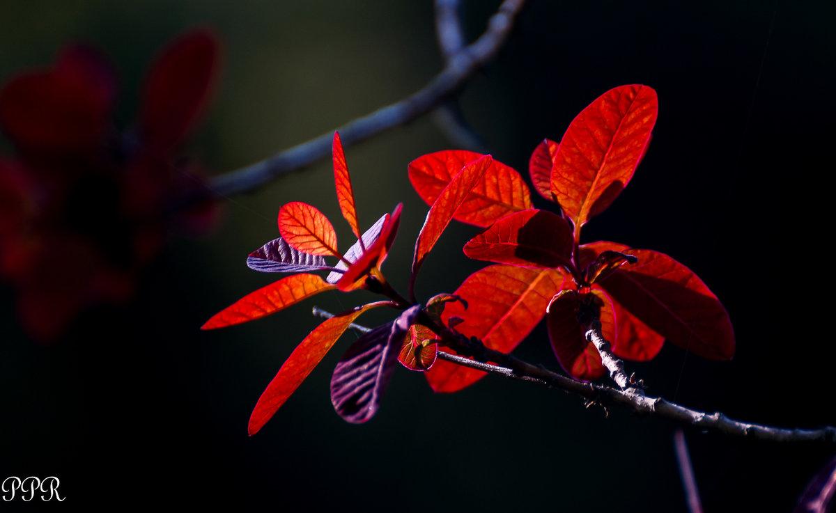 Рай-дерево - Павел Руденко
