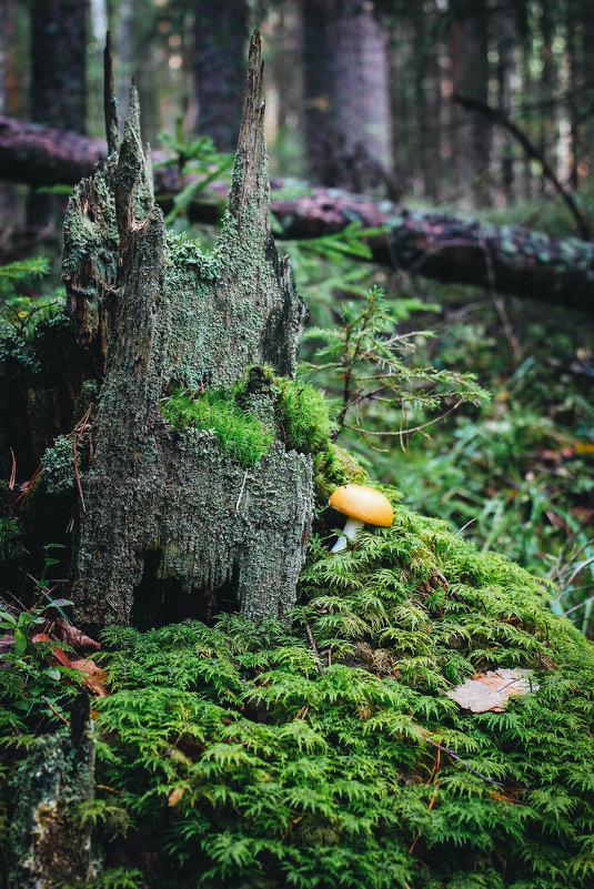 Дремучий лес - Маргарита Си