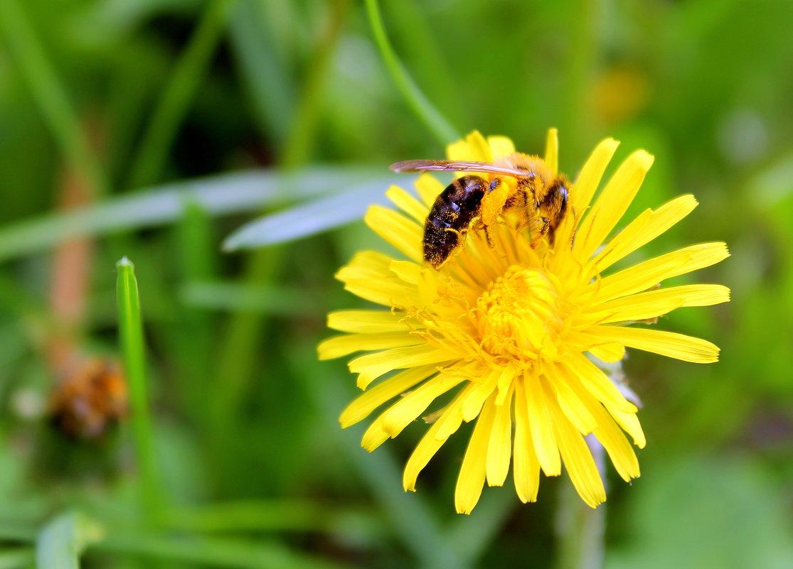 Собирает пчелка летнее тепло,чтоб оно зимою нас согреть могло. - Валентина ツ ღ✿ღ