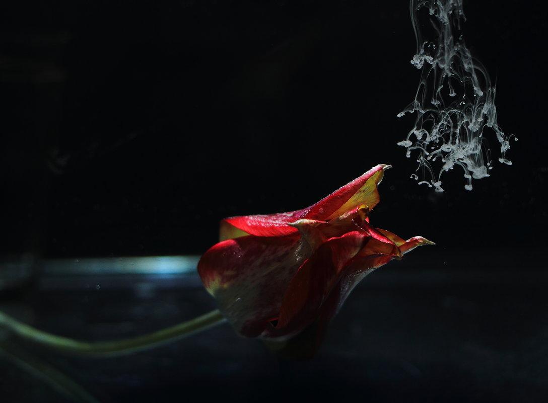 Хищный тюльпан - Юрий Гайворонский