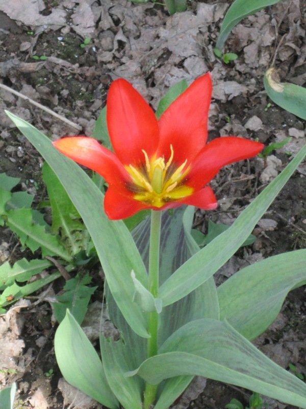 Первый аленький цветочек - Дмитрий Никитин