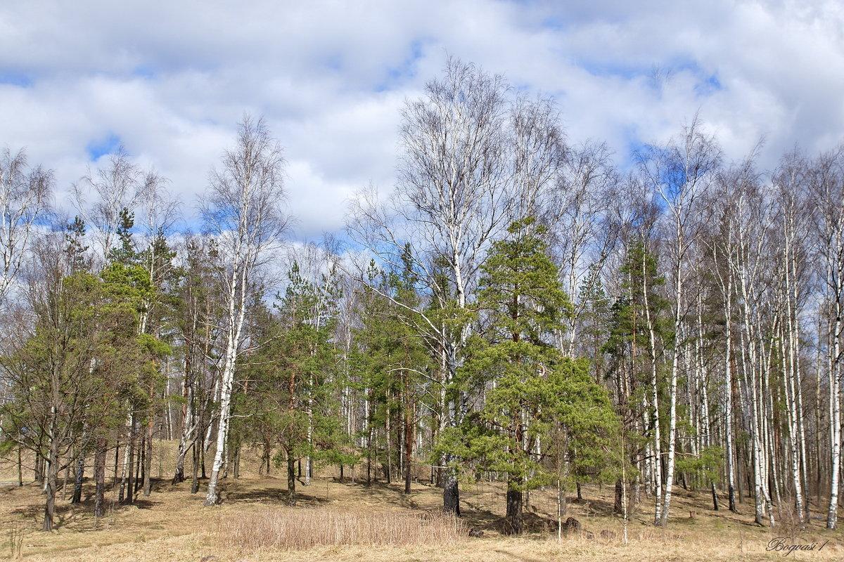 Весенний пейзаж - Василий Богданов