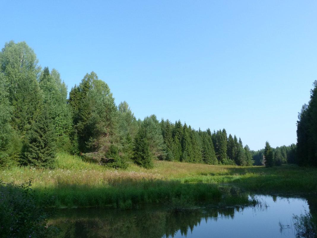Лес на речном берегу. - Марина Китаева