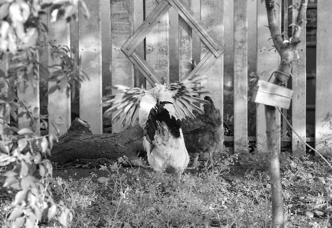 Молчи, курица! Я не петух, я орёл - Андрей Майоров