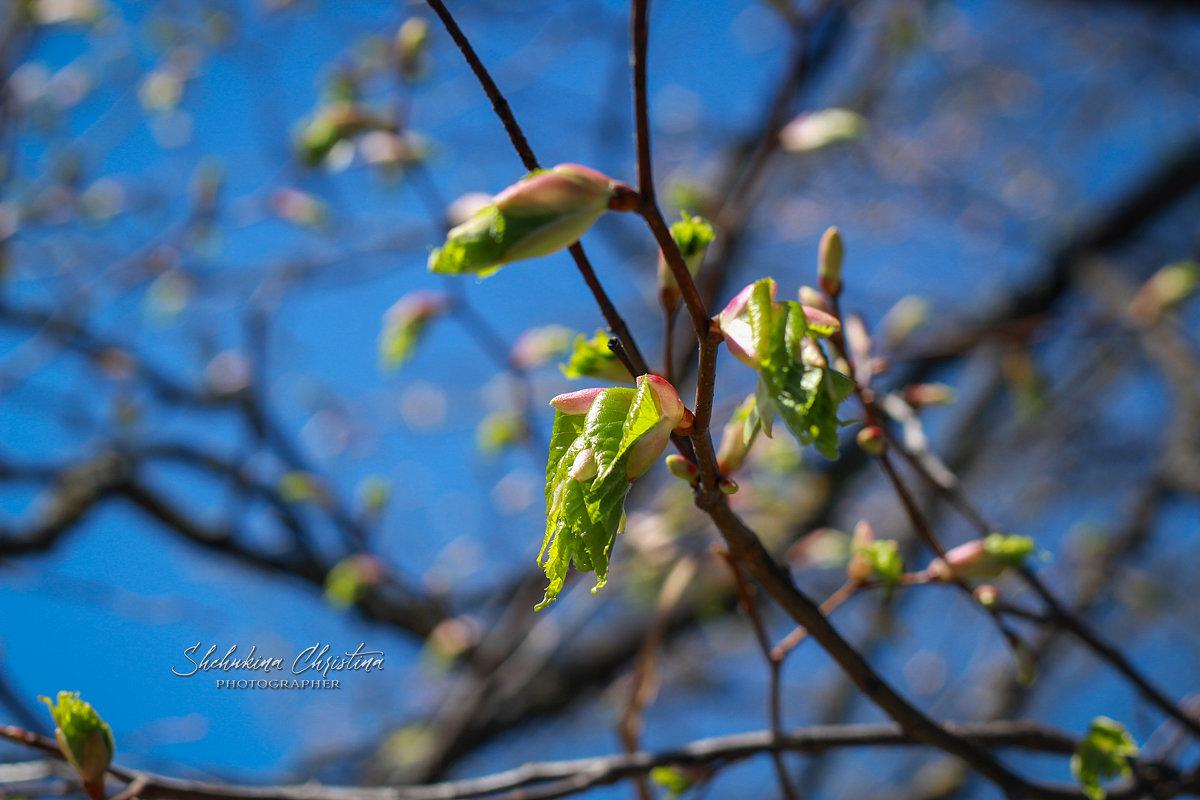 листики - Кристина Щукина