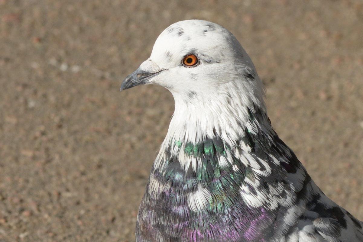 портрет - linnud
