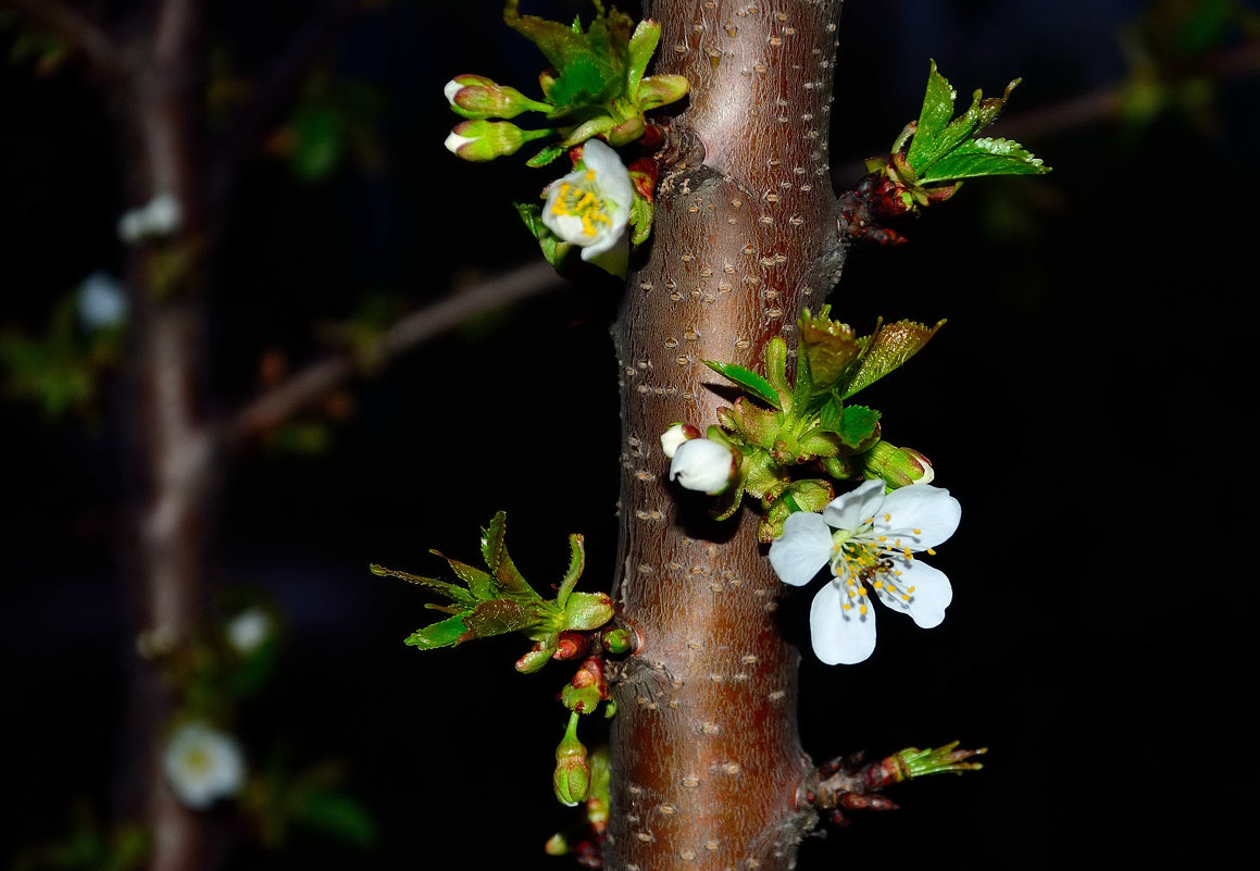 Весны цветенье... - Александр