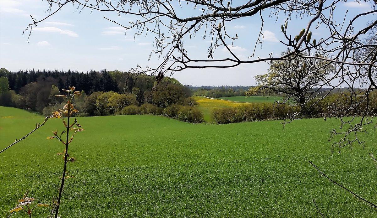 Пейзаж, открывшийся с дороги - Валерий Розенталь