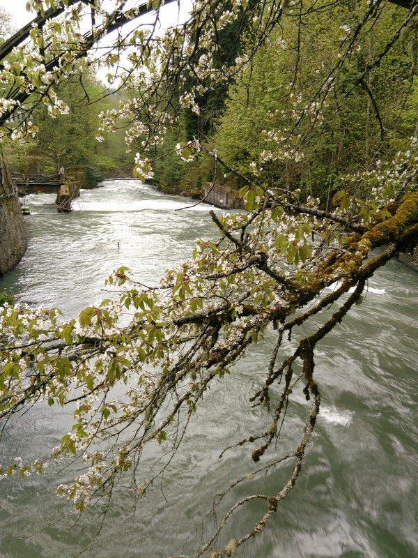 Горная река - Аlexandr Guru-Zhurzh