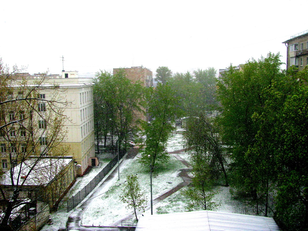 Снегопад в Москве  8 мая 2017г. - Владимир Драгунский